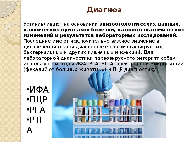 Диагностика парвовирусного энтерита