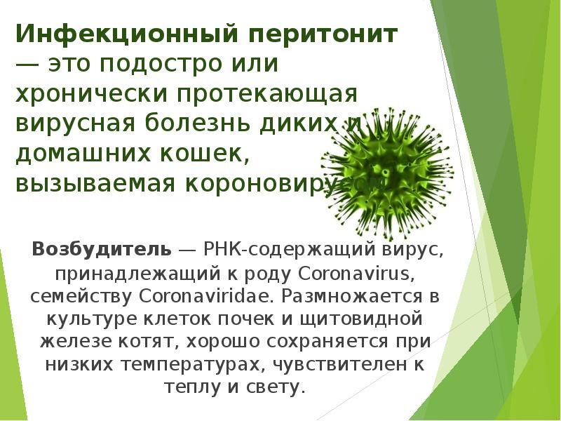 Вирус инфекционного перитонита
