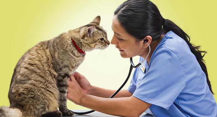 Вирусный лейкоз у кошек