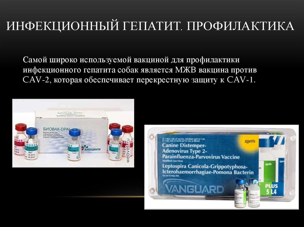 Инфекционный гепатит у собак: прививки