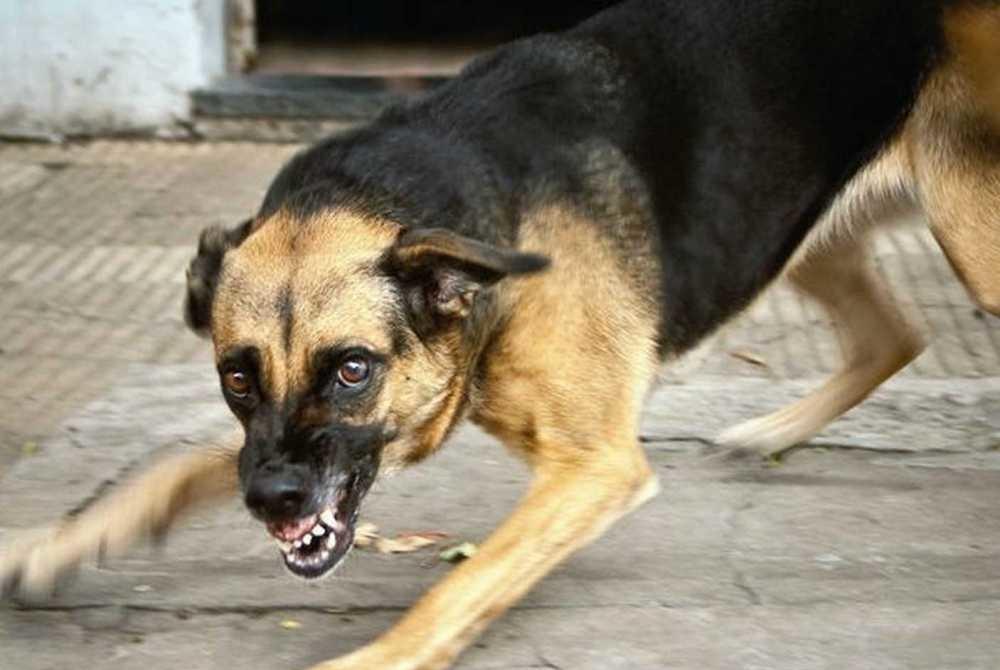 Атипичное бешенство у собак