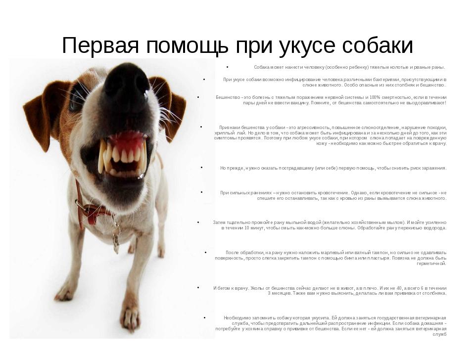 Как помочь человеку при укусе бешеной собаки