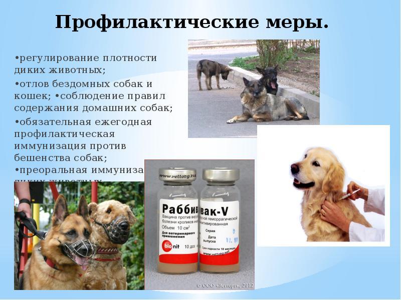 Профилактика бешенства у собак