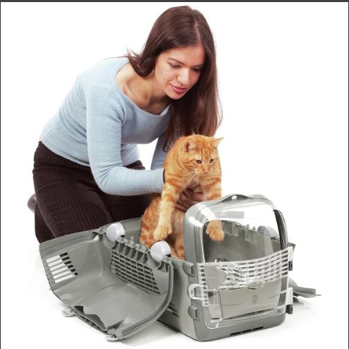 уложить кота в переноску