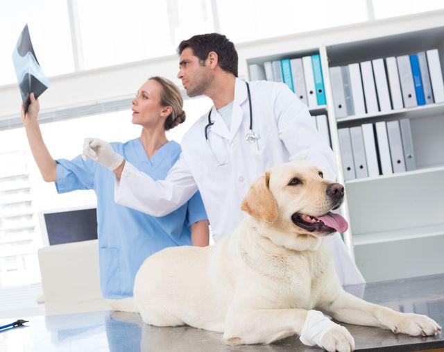 Остеоартроз у собак